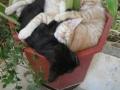 Catnap after Catnip